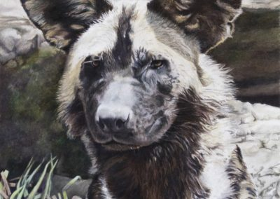 African Painted Dog II