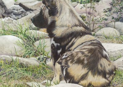 African Painted Dog I