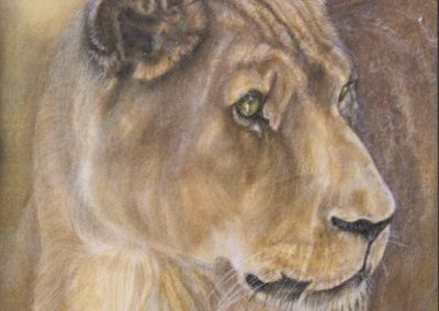 Portrait of a Lioness Evelyn Rivera