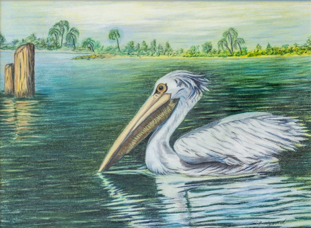 Portrait of a Pelican