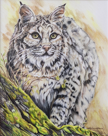 Bobcat, Patty Coulter